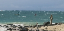 SUP Hawaii Maui - Downwind Session Juni 2014_12